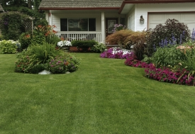 front_yard01